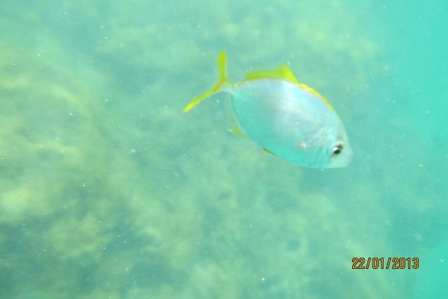 Peixinho lindinho.